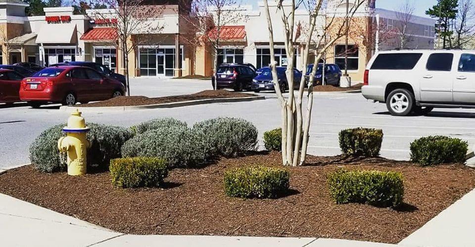 Freshly pruned bushes in a business landscape bed