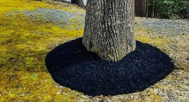 Freshly Mulched Tree Ring