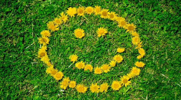 Dandelion flowers arranged on a lawn in the shape of a smiley face.