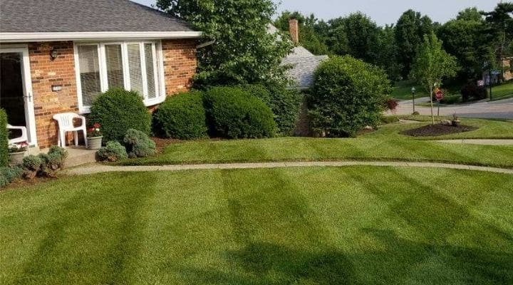 Really green grass in a front lawn without any weeds.